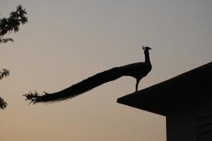 Ananda Spa Peacock