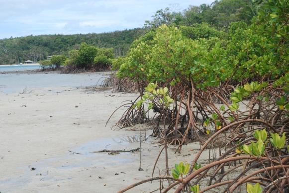 dolphin-island-fiji-deserted-beach-2