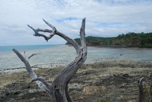 dolphin-island-fiji-deserted-beach
